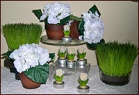 White Hydrangea in Clay Pot/Mini Hyacinth Votives-white, hydrangea, clay, votives, candles, grass, candle spring, easter