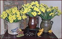 Narcissus!!  Full, full, full!!-narcissus, yellow, spring, flowers, easter, floral, spring decor,